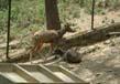 Manali Zoo
